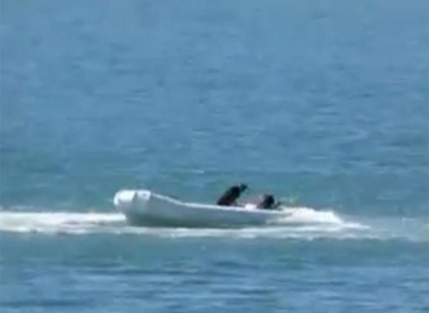 Cão foi resgatado após ficar sozinho em bote desgovernado na Austrália (Foto: Reprodução/YouTube/Ck Kern)