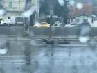 Jacarés aparecem em avenida de Manaus durante chuva