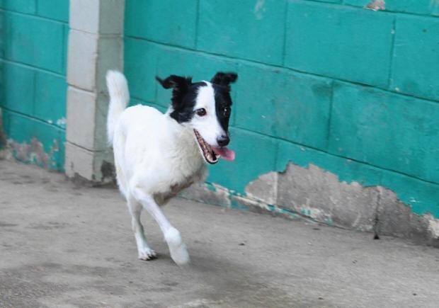 Cachorra Manuela (Foto: Nirley Sena/A Tribuna de Santos)
