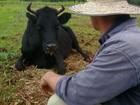 Casos de raiva em bovinos colocam Fronteira Noroeste do RS em alerta
