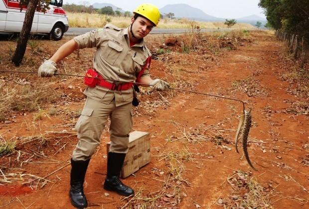 Bombeiros resgatam cobra em Goiás 2 (Foto: Divulgação/ Corpo de Bombeiros)