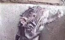 Rato toma banho?