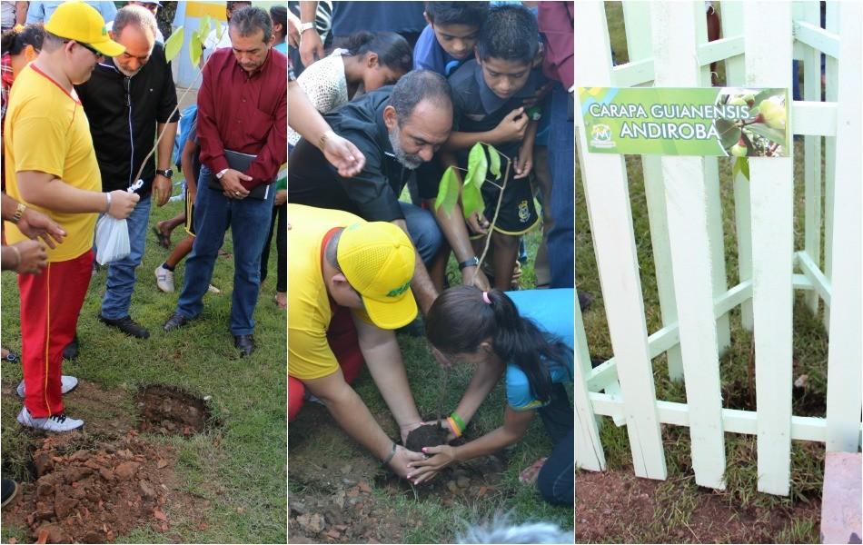 Muda de andiroba foi plantada em frente a uma escola do município (Foto: Katiúscia Monteiro/ Rede Amazônica)