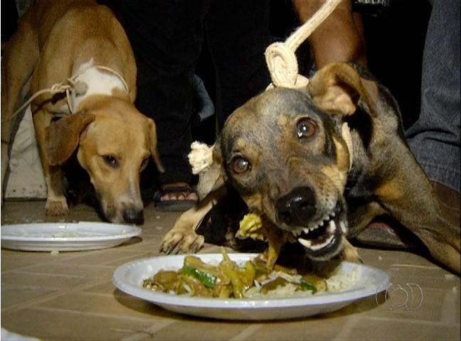 Comida é preparada especialmente para os cachorros, em festa em homenagem a São Lázaro (Foto: Reprodução/TV Anhanguera)