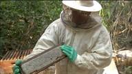 Sombra e boa oferta de água são fundamentais para a qualidade do mel