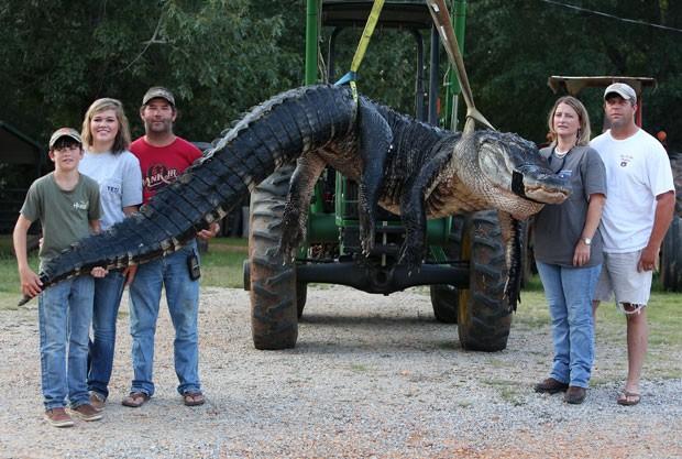 Família bate recorde ao caçar jacaré de 4,6 metros e 459 quilos nos EUA (Foto: Sharon Steinmann/Al.com/AP)