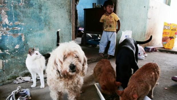 Ação - Mutirão - Organização Bem-Animal (Foto: Divulgação/OBAFloripa)