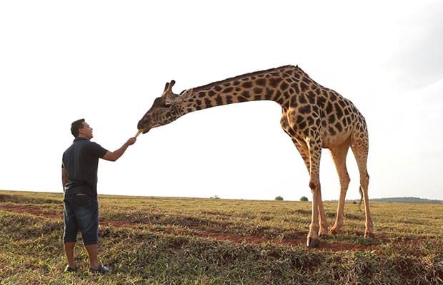 Marcelo Honorato venceu o medo e alimentou a girafa da Reserva Ecológica  (Foto: Divulgação | Tô Indo)