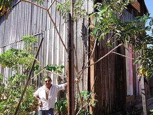 Morador mostra pé de mandioca de mais de cinco metros. (Foto: Valmir da Silva Oliveira/ VC no G1)