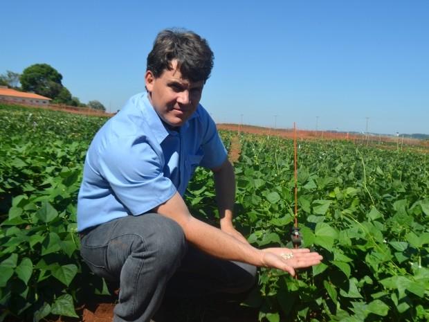 Pesquisador Alisson Chiorato mostra cultivo de feijão resistente no IAC (Foto: Fernando Pacífico / G1 Campinas)