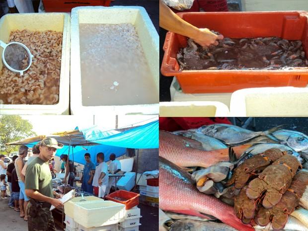 Pescado é apreendido em período de defeso. (Foto: Roberto Martins/ Polícia Ambiental)