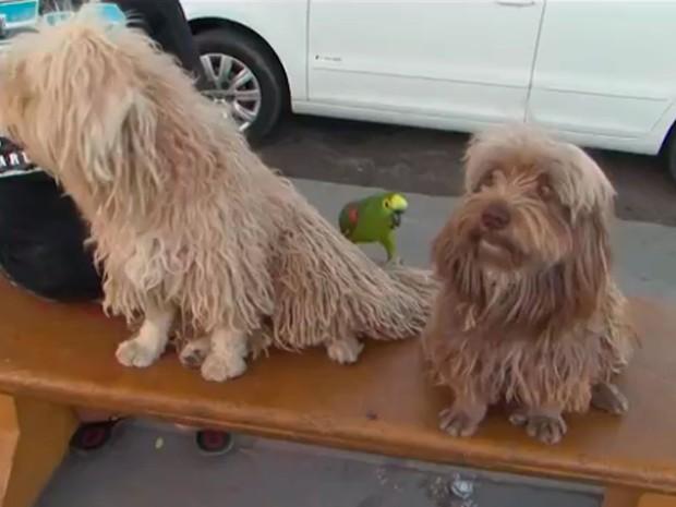 Papagaio e cachorro em Feira de Santana, na Bahia (Foto: Reprodução/ TV Subaé)
