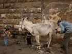 Lista reúne 'barbeiro de burro' e outras profissões curiosas