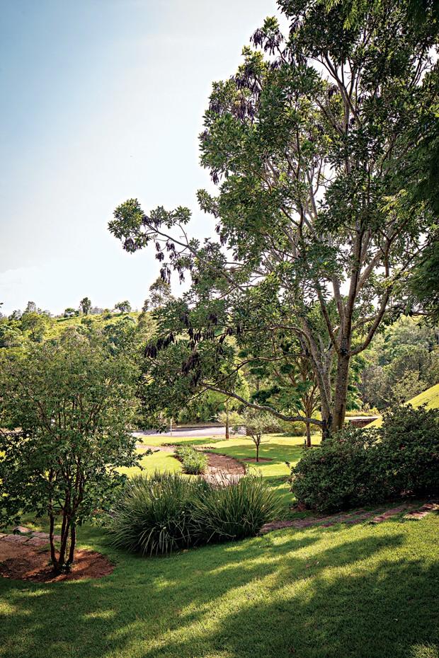 Jardim | A jabuticabeira, à esq. foi plantada pelo filho caçula do casal de moradores, Diogo. Junto a ela, renque de moreias. Ao lado, uma frondosa suinã (Foto: Gui Morelli)