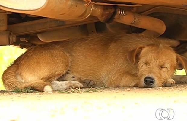 Animais considerados saudáveis não podem ser recolhidos pelo Centro de Zoonozes (Foto: Reprodução/TV Anhanguera)