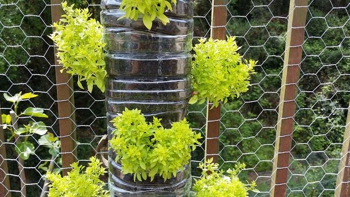 Você pode comprar vasos novos ou até mesmo reutilizar potes  (Foto: Divulgação)