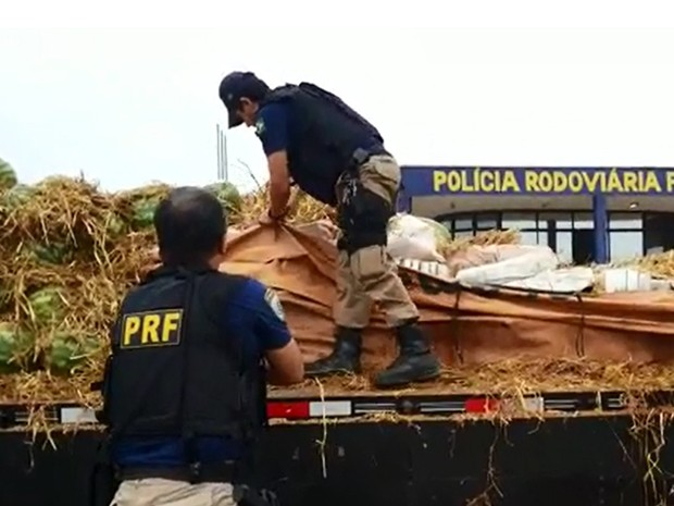 Pelo menos 1 tonelada de maconha estava escondida embaixo das frutas (Foto: PRF Pouso Alegre)