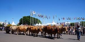 Desfile de cavaleiros resgata a tradição sertaneja em Sumaré  (Rubens Morelli)