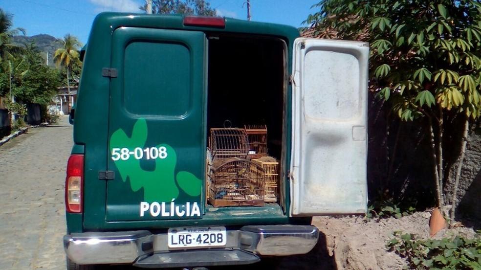 Foram apreendidos quatro pinxoxós, três melros, seis canários da terra e 12 coleiros (Foto: Divulgação/Polícia Ambiental)