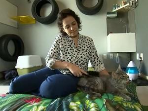 Mercado pet se adapta para atender gatos de estimação e seus donos (Foto: Reprodução/TV TEM)