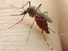Chega a 14 número de óbitos por dengue no Ceará em 2016