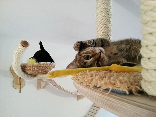 Gatos ainda podem tirar uma soneca lá em cima (Foto: Divulgação)
