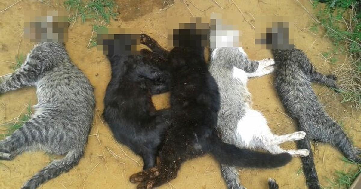 Polícia investiga morte de gatos em bairro de São José do Rio Preto - Globo.com
