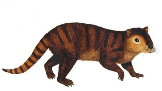 Fóssil do animal, que se assemelha a um castor, foi encontrado nos Estados Unidos (Foto: Sarah Shelley)