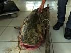 Com seca do Rio Acre, homem pesca peixe de 70 kg em Rio Branco