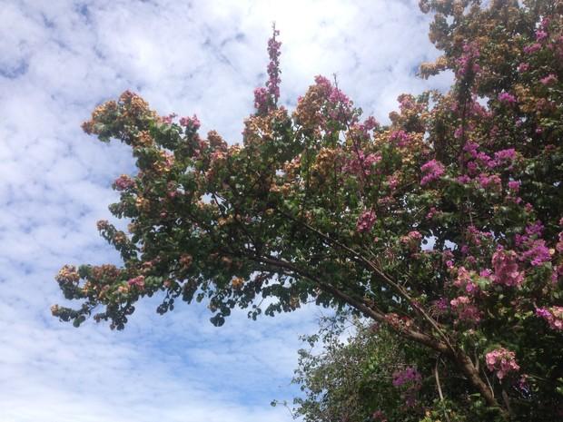 Campo Grande deve ter tempo nublado e chuva nesta segunda-feira, segundo o Inmet (Foto: Anderson Viegas/Do G1 MS)