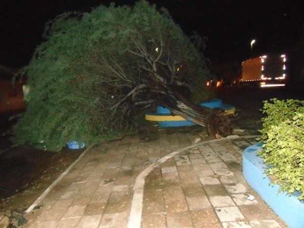 Chuva de granizo e fortes ventanias derrubaram árvores e causaram transtornos em Ouricuri, PE (Foto: José Cariri de Lima/ Arquivo pessoal )