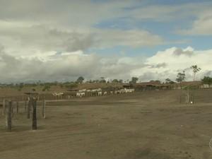 Com estiagem prolongada, o capim não resiste e a pastagem fica completamente seca (Foto: Reprodução/TV Bahia)