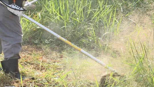 Órgãos de SC alertam para lagarta e escorpião-amarelo, comuns no verão