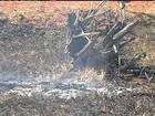 Jovem é preso em flagrante ao pôr fogo à beira de rodovia de Goiânia