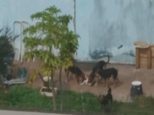 Cães comem cachorro morto em casa de Rio Preto  (Foto: Reprodução/ TV TEM)