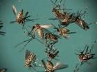 Segunda fase da vacinação contra a dengue começa em 3 de março no PR