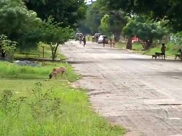 Corumbá, onde paciente diagnosticado com raiva foi mordido por cão doente, enfrenta surto da doença entre os animais (Foto: Reprodução/TV Morena)