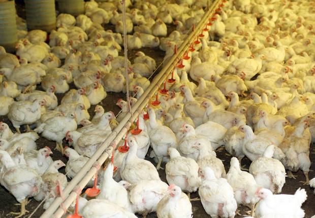 O faturamento do setor agropecuário paranaense deve crescer cerca de 3% em 2015, chegando a próximo de R$ 73 bilhões. A produção de carne de frango para exportação está entre os destaques do setor (Foto: Jonas Oliveira/ANPr)