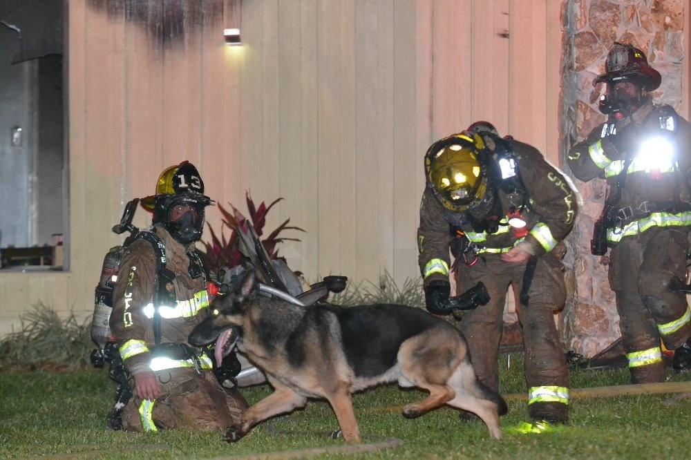 cão (Foto: SEMINOLE COUNTY FIRE DEPARTMENT)