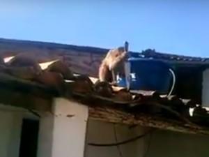 Macaco pegou faca que estava sobre uma mesa (Foto: Reprodução/TV Paraíba)