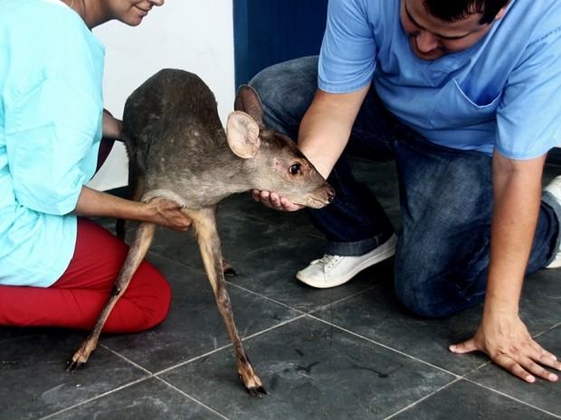 Animal está sendo tratado no Centro de Controle de Zoonoses de Peruíbe (Foto: Marcos Costa / Prefeitura de Peruíbe)