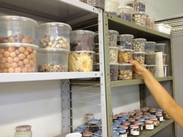 Parque possui laboratório com sementes de plantas nativas do Acre (Foto: Yuri Marcel/G1)