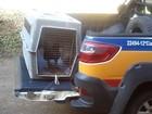 Justiça determina retirada de urubu domesticado de casa em Ipatinga
