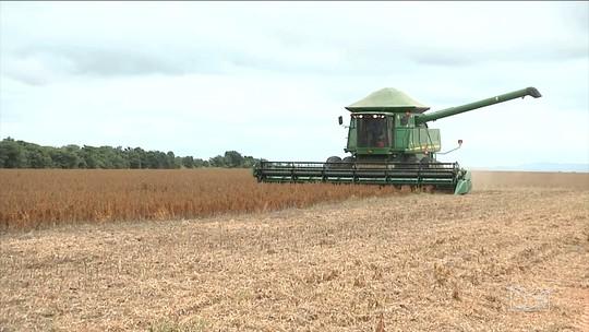 Aberta a colheita da safra agrícola no sul do Maranhão