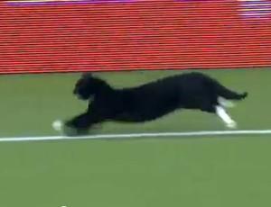 Gato preto invade partida do Campeonato Holandês (Foto: Reprodução Internet)