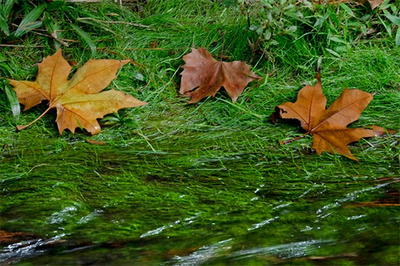 Folhas secas nas margens do riacho  (Foto: © Giselle Paulino)