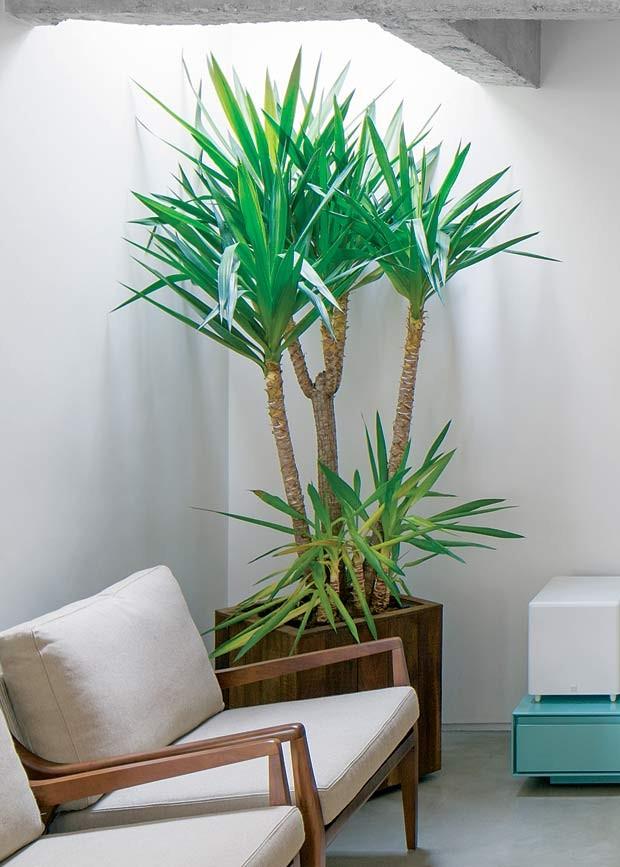 13 plantas para cultivar dentro de casa casa e jardim paisagismo - Plantas grandes para interiores ...