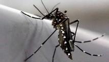 Vigilância registra 800 suspeitas de zika vírus  (Paulo Whitaker/Reuters)