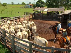 Eficiência em pecuária de corte é tema de circuito que começa atividades por Cuiabá (MT) (Foto: Reprodução/TVCA)