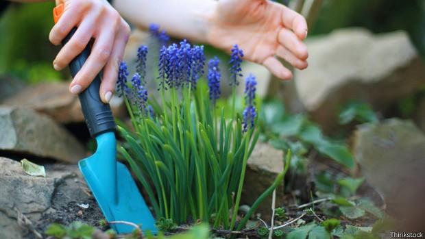Atividades como jardinagem também ajudam a perder peso, não só exercícios de alto impacto (Foto: Thinkstock/BBC)